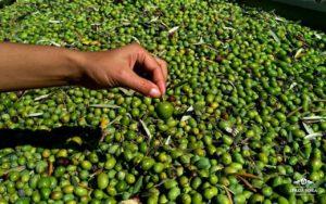 dei-principi-di-spadafora-olio-di-oliva-siciliano