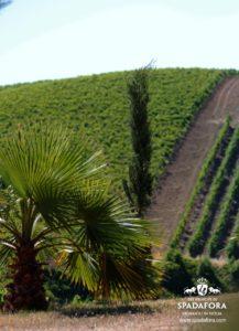 acquisto-urgente-vino-biologico-per-ristoratori