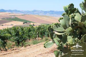 vendita-online-vino-naturale-biologico-senza-solfiti