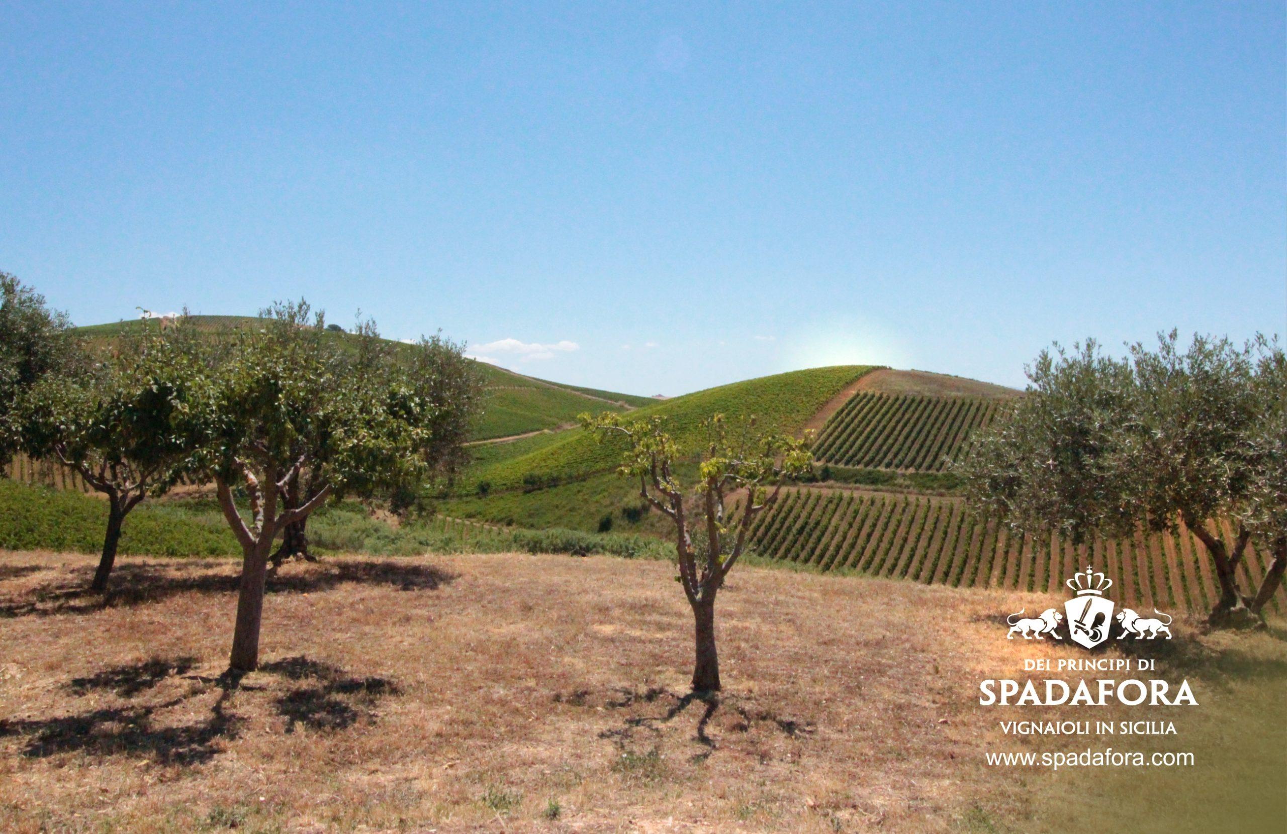 vino biologico siciliano