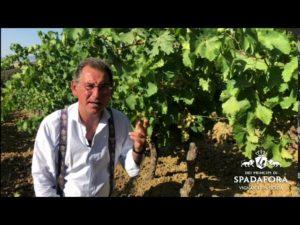 Vendemmia vino biologico 2020
