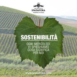 produttore vino biologico da agricoltura sostenibile
