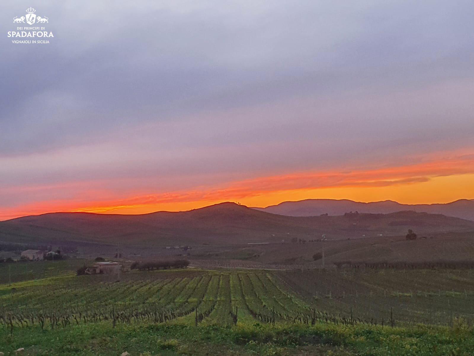 vendita online vino prodotto con uva da agricoltura biologica