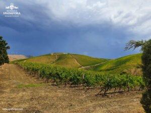 produttori-di-vino-biologico-siciliano-dei-principi-di-spadafora