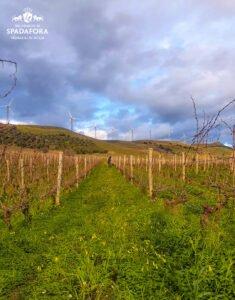vino-biologico-siciliano-dei-principi-di-spadafora