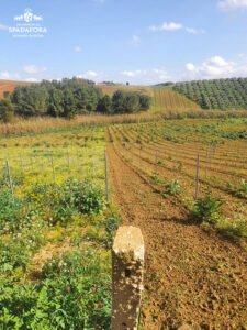 the best Sicilian organic wine