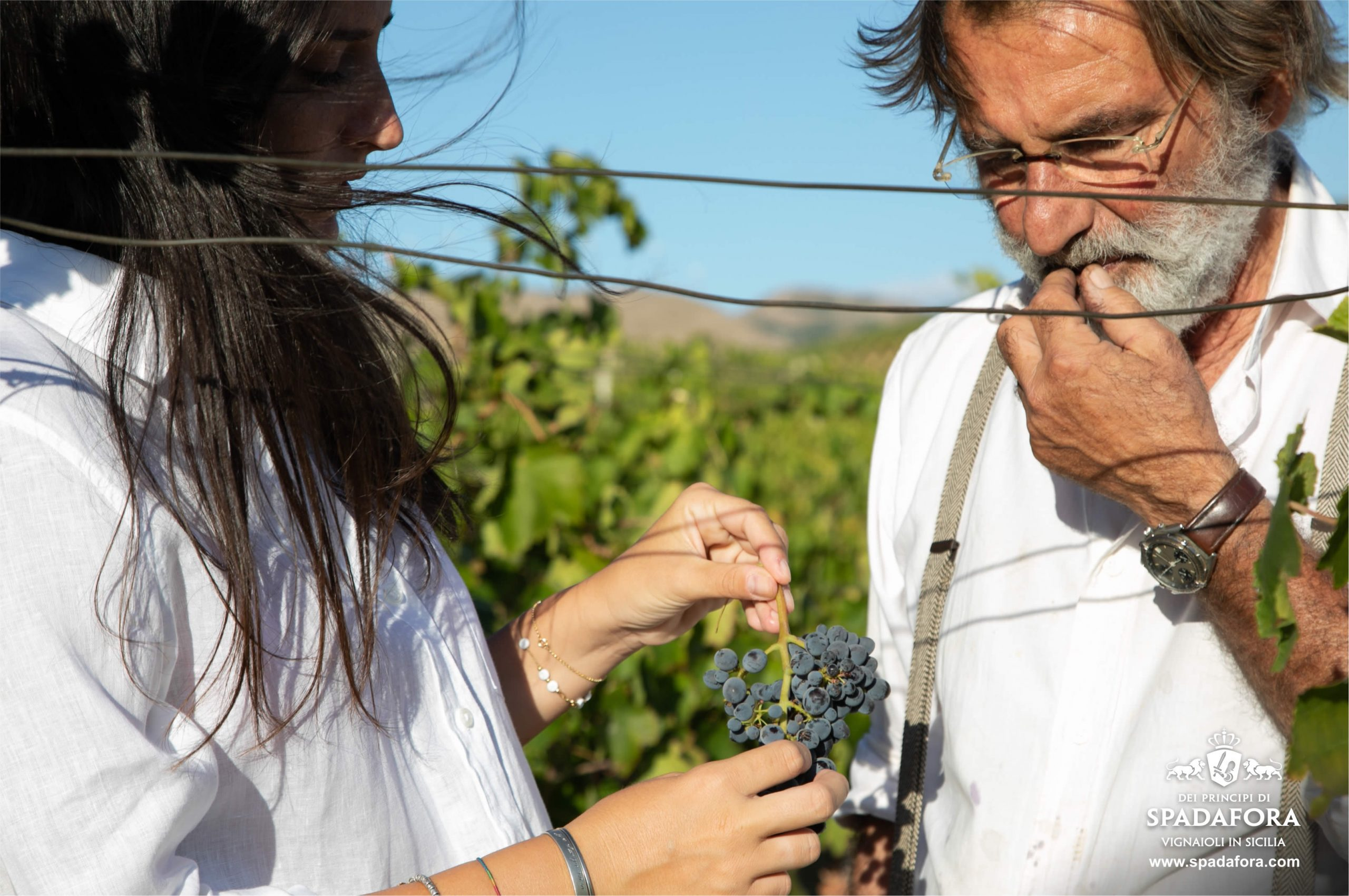 pruduzione siciliana vino biologico senza solfiti da agricultura sostenibile